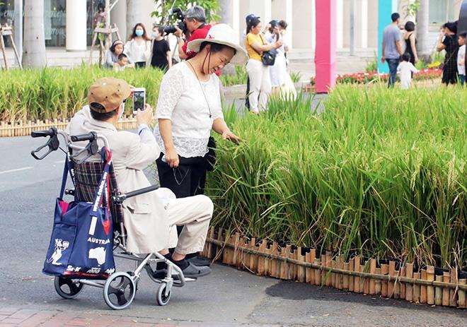 """Ngắm đường hoa dài 700m ở Phú Mỹ Hưng, điểm """"check in"""" cho du khách dịp Tết đến Xuân về - hình ảnh 9"""