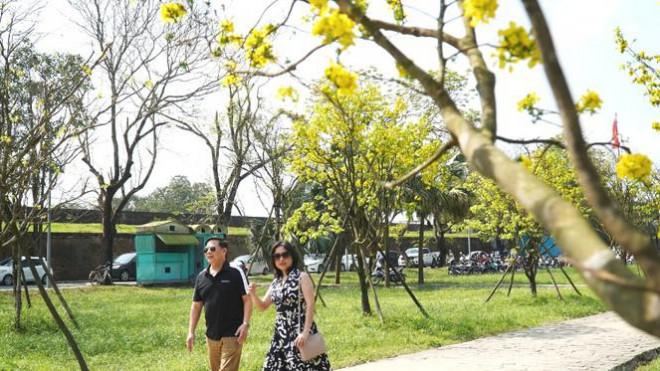 Sững sờ trước 'góc trời Hoàng mai' rực rỡ trong kinh thành Huế - 7