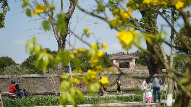 Sững sờ trước 'góc trời Hoàng mai' rực rỡ trong kinh thành Huế - 16