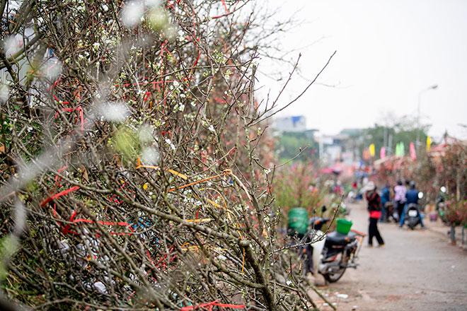 Hoa lê rừng khoe sắc trắng tinh khôi, hút hồn người chơi hoa Hà Nội - hình ảnh 10