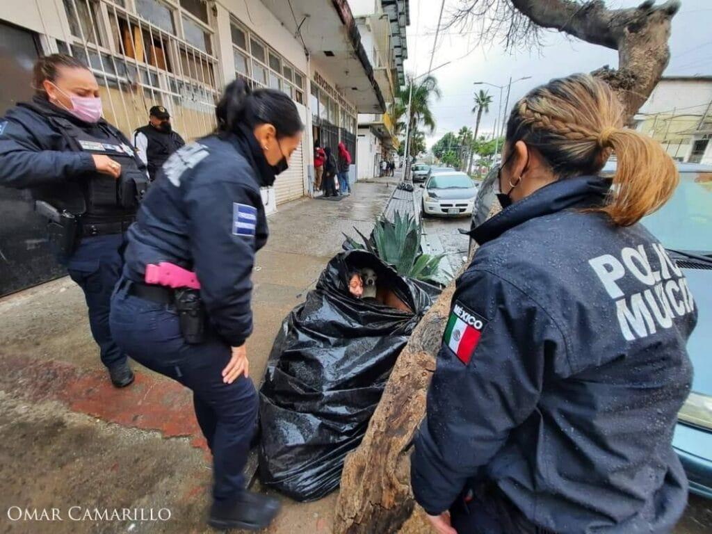 Bà lão sống trong túi rác 8 năm nhất định không chịu rời đi, biết lý do ai cũng rơi nước mắt - 2