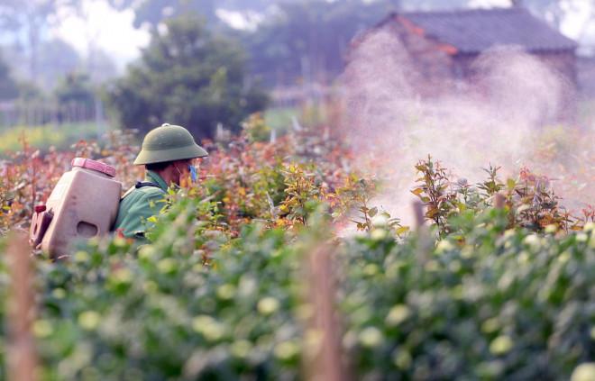 Rẻ bằng 1/3 so với trước Tết, nông dân rớt nước mắt nhìn ruộng hoa nở rộ - 11