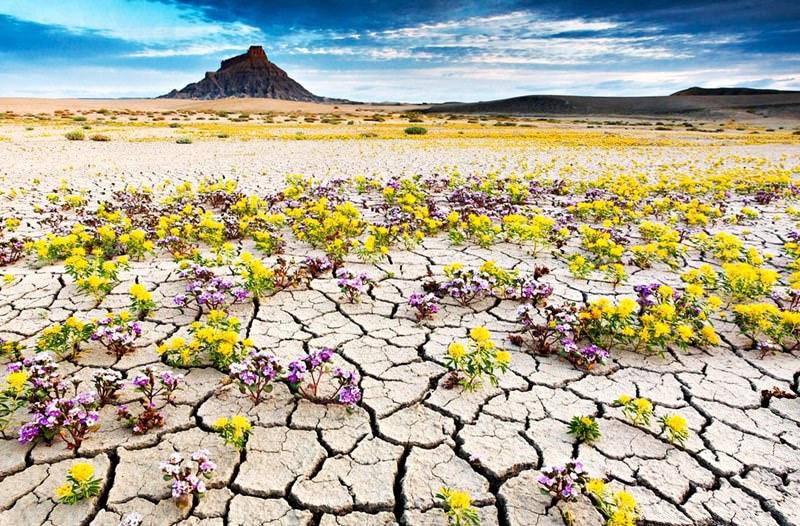 Những sa mạc kỳ quái nhất hành tinh khiến cả những du khách giàu kinh nghiệm nhất phải kinh ngạc - 13