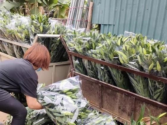 Sát Rằm tháng Giêng, giá hoa ở Hà Nội thấp lạ thường - 3