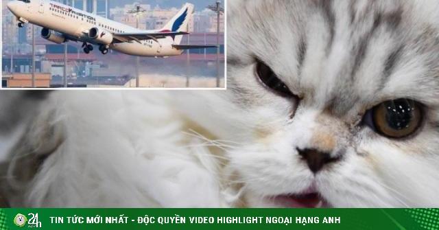 Máy bay hạ cánh khẩn cấp vì phi công bị vị khách không mời tấn công