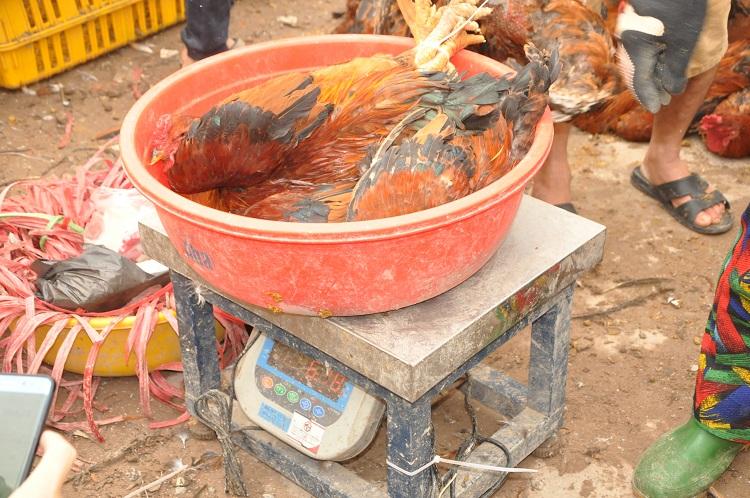 Gà đồi Chí Linh giá chỉ 55.000 đồng/kg, hàng trăm người Hà Nội xếp hàng mua giải cứu - 10