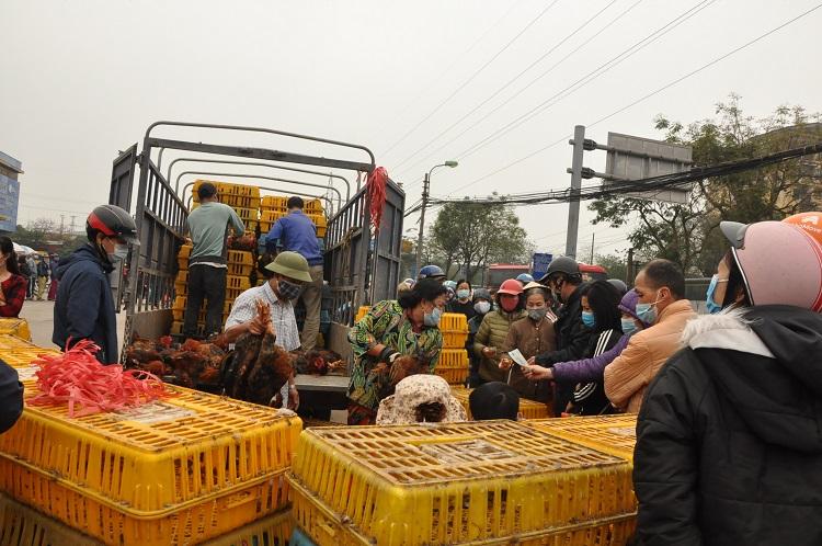 Gà đồi Chí Linh giá chỉ 55.000 đồng/kg, hàng trăm người Hà Nội xếp hàng mua giải cứu - 4