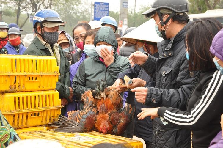 Gà đồi Chí Linh giá chỉ 55.000 đồng/kg, hàng trăm người Hà Nội xếp hàng mua giải cứu - 6