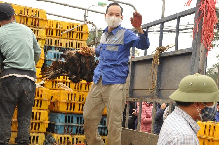 Gà đồi Chí Linh giá chỉ 55.000 đồng/kg, hàng trăm người Hà Nội xếp hàng mua giải cứu - 8