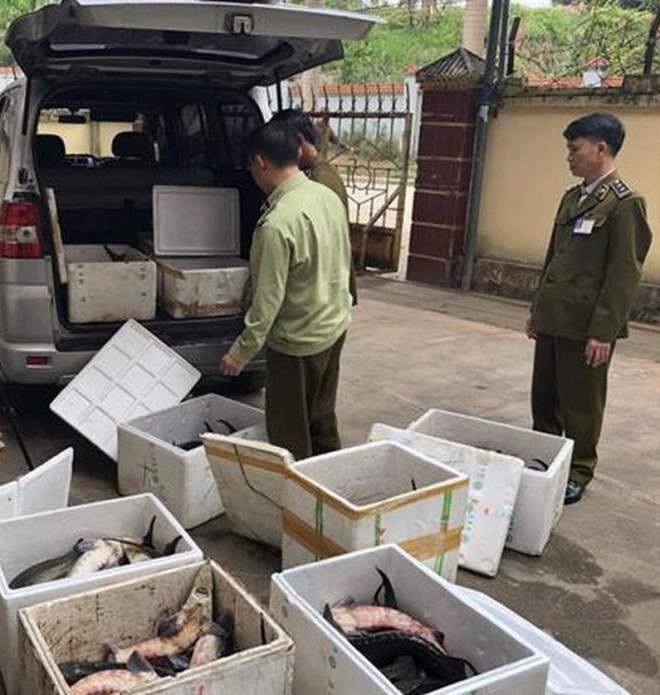"""Cá tầm Trung Quốc siêu rẻ quá nhiều, hạ """"đo ván"""" cá trong nước - 3"""