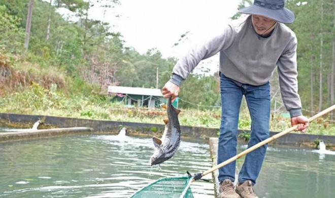 """Cá tầm Trung Quốc siêu rẻ quá nhiều, hạ """"đo ván"""" cá trong nước - 1"""