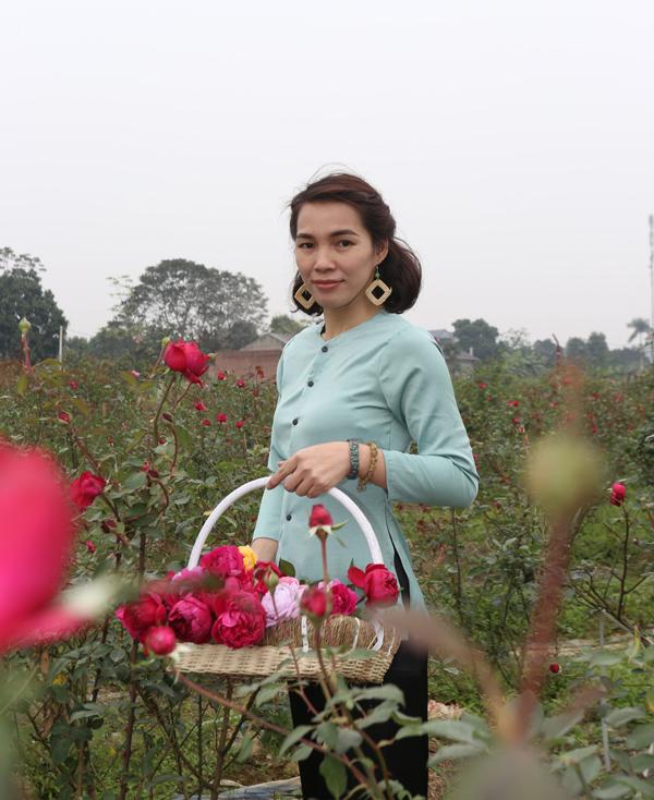 Hoa hồng được cô thu hái từ những vườn đã liên kết.