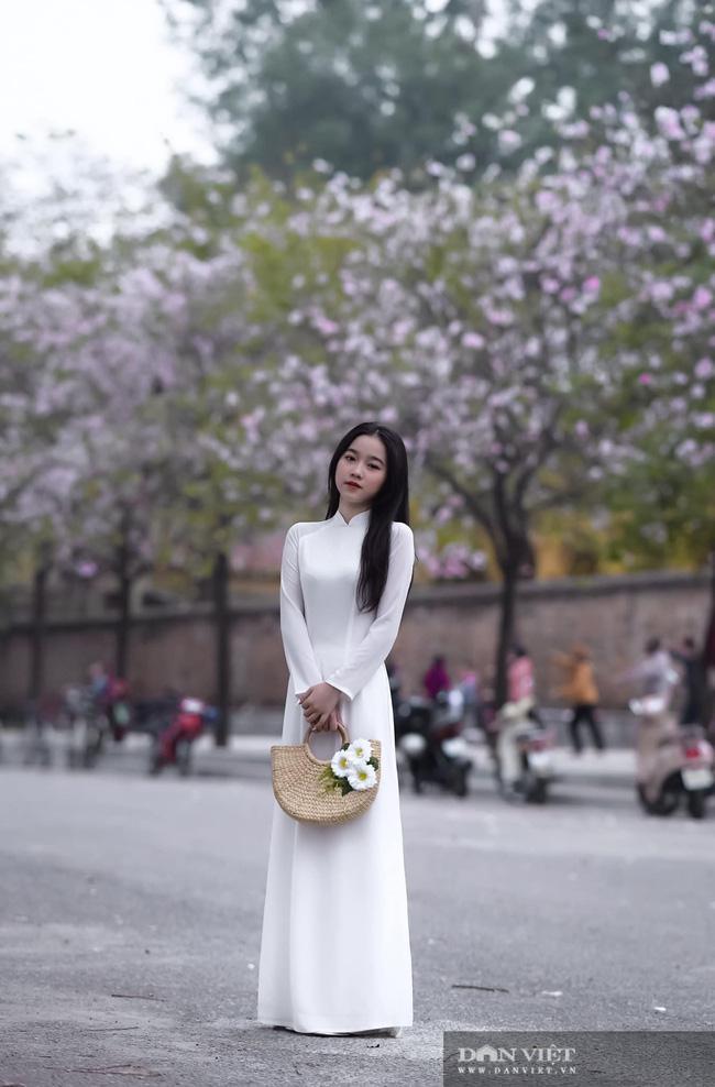 """Hà Nội: Hoa ban nở rộ, giới trẻ đua nhau """"khoe sắc"""" trên phố Bắc Sơn, Hoàng Diệu - 7"""