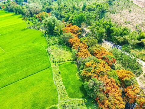 Hoa trang rừng phủ kín suối Tà Má - hình ảnh 1