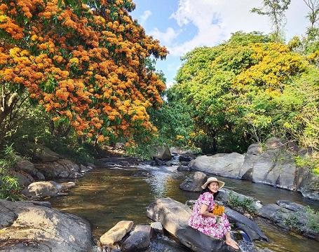 Hoa trang rừng phủ kín suối Tà Má - hình ảnh 2