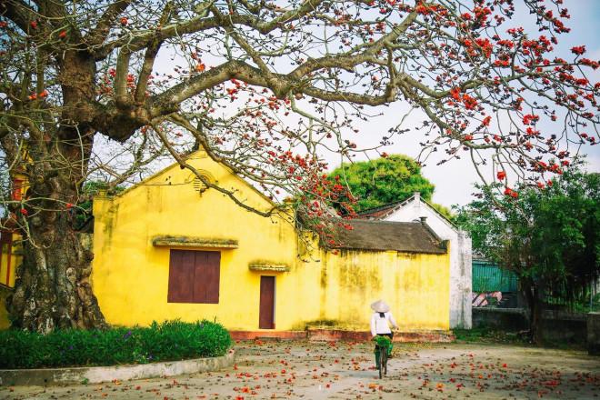 Choáng ngợp trước bộ ảnh hoa gạo đẹp đến nao lòng trên miền quê Thái Bình - 7