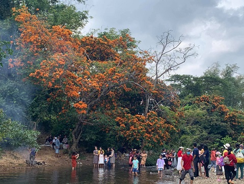 Hoa trang rừng phủ kín suối Tà Má - hình ảnh 4