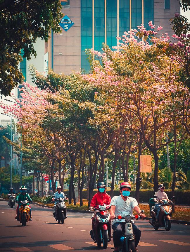 Không ngờ giữa Sài Gòn lại có những con đường hoa đẹp đến thế này! - 2