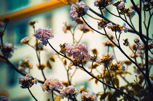 Không ngờ giữa Sài Gòn lại có những con đường hoa đẹp đến thế này! - 8