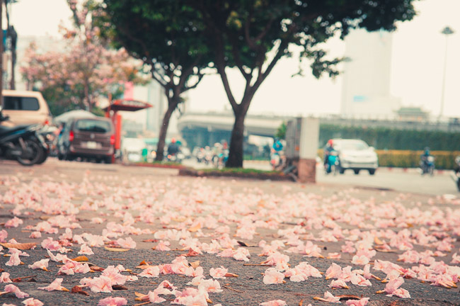 Không ngờ giữa Sài Gòn lại có những con đường hoa đẹp đến thế này! - 9