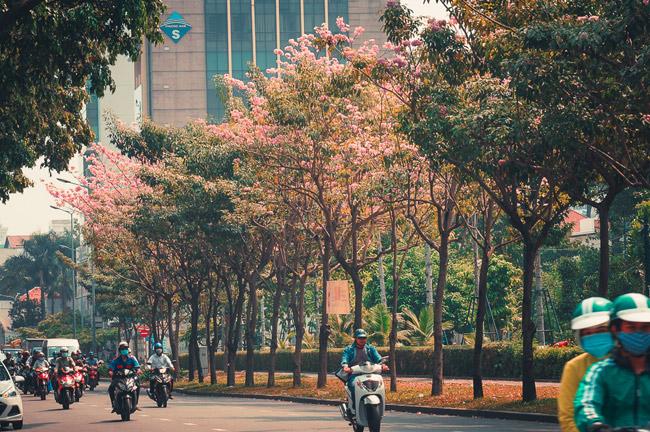 Không ngờ giữa Sài Gòn lại có những con đường hoa đẹp đến thế này! - 4
