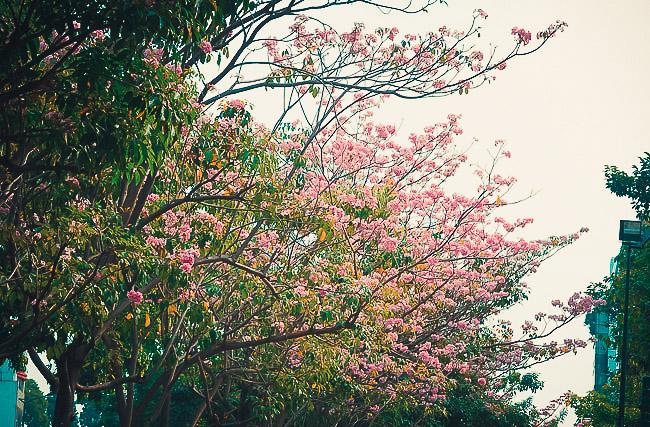 Không ngờ giữa Sài Gòn lại có những con đường hoa đẹp đến thế này! - 7