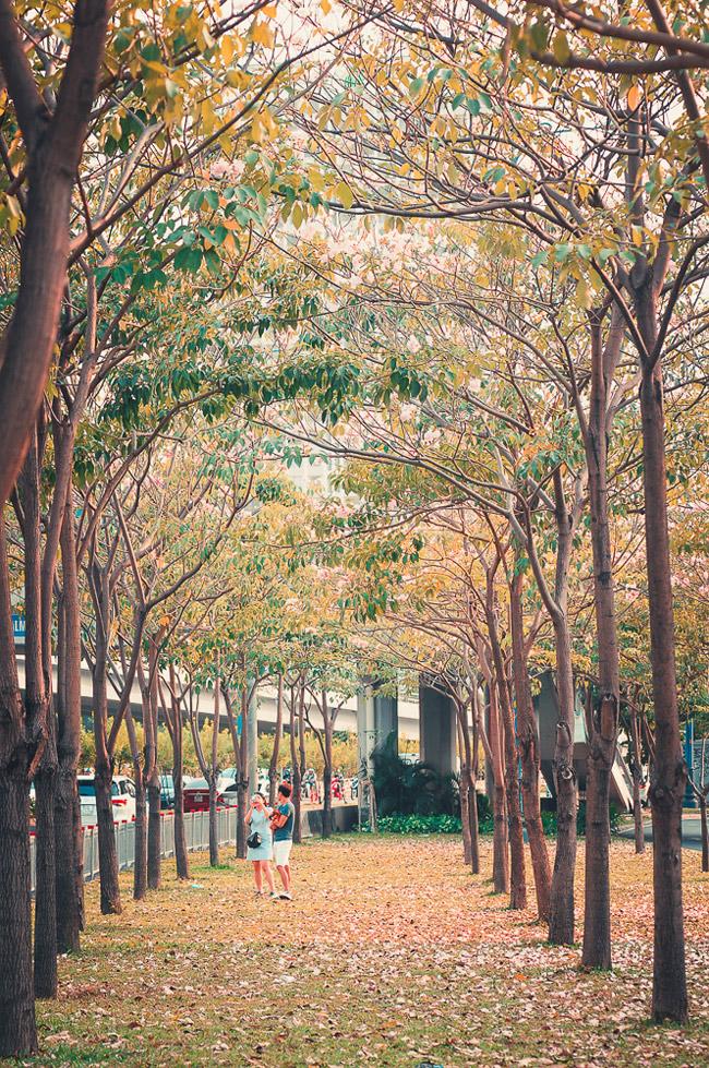 Không ngờ giữa Sài Gòn lại có những con đường hoa đẹp đến thế này! - 11