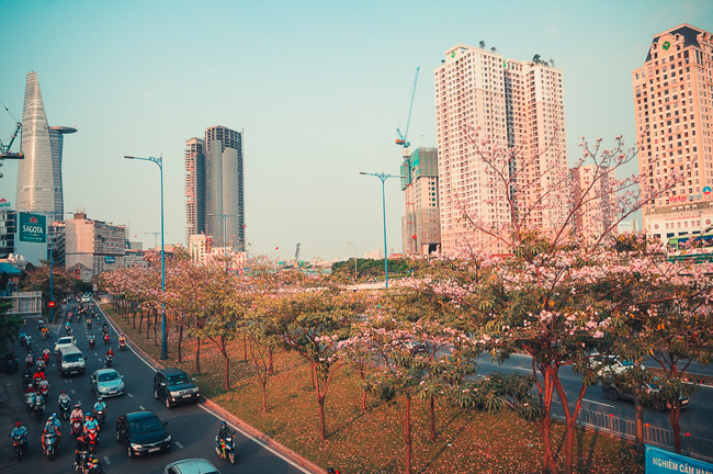 Không ngờ giữa Sài Gòn lại có những con đường hoa đẹp đến thế này! - 13