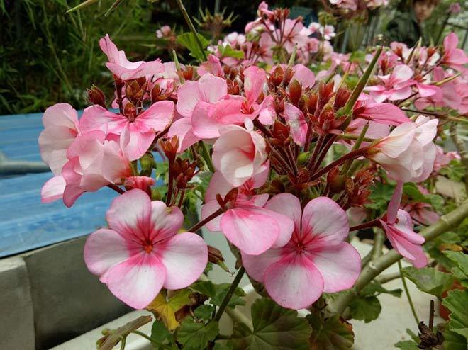 Vườn hoa lan vạn người mê trị giá tiền tỷ ở cao nguyên Mộc Châu - 10
