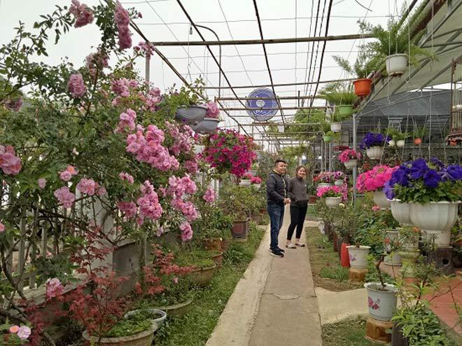 Vườn hoa lan vạn người mê trị giá tiền tỷ ở cao nguyên Mộc Châu - 5
