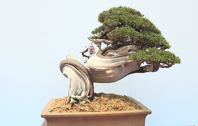 Chiêm ngưỡng dàn bonsai đẹp kiệt xuất trên đất Yên Tử - 6