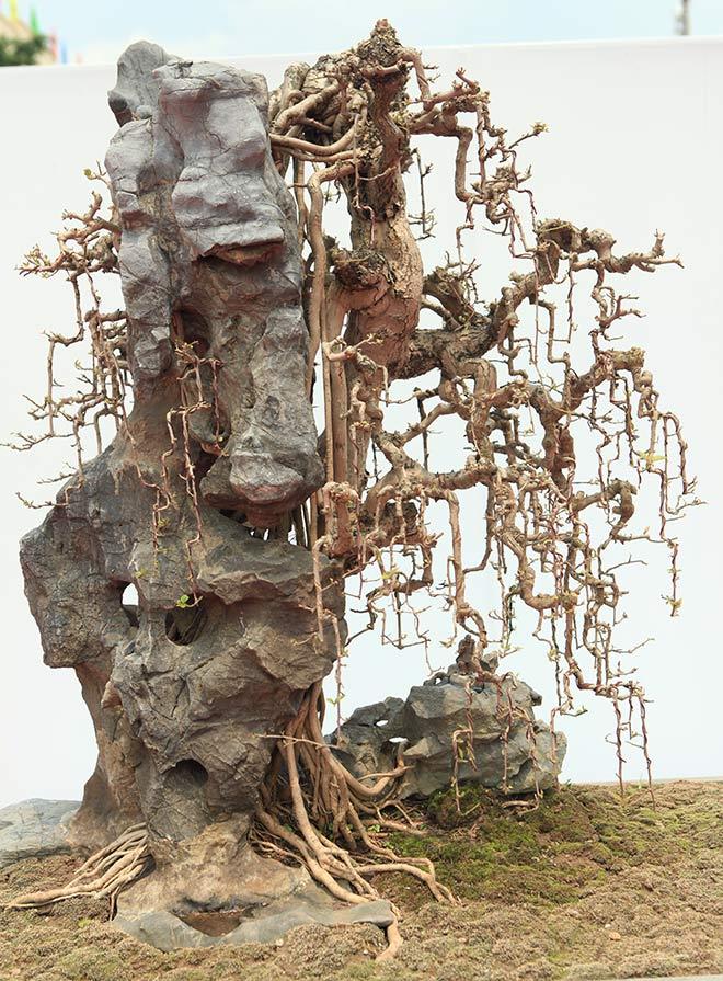 Chiêm ngưỡng dàn bonsai đẹp kiệt xuất trên đất Yên Tử - 13