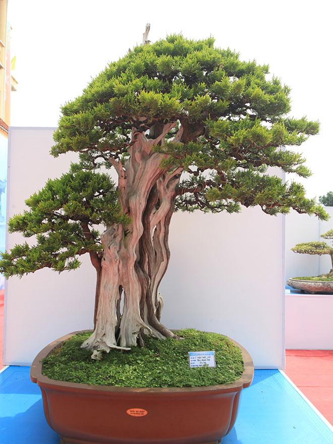 Chiêm ngưỡng dàn bonsai đẹp kiệt xuất trên đất Yên Tử - 12