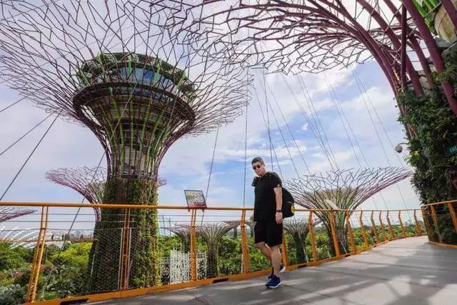 Sạch đẹp thôi chưa đủ, Singapore còn chi hàng nghìn tỷ đồng xây dựng vườn nguyên sinh khổng lồ tuyệt đẹp - hình ảnh 4
