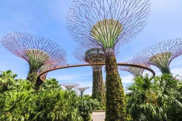 Sạch đẹp thôi chưa đủ, Singapore còn chi hàng nghìn tỷ đồng xây dựng vườn nguyên sinh khổng lồ tuyệt đẹp - hình ảnh 2