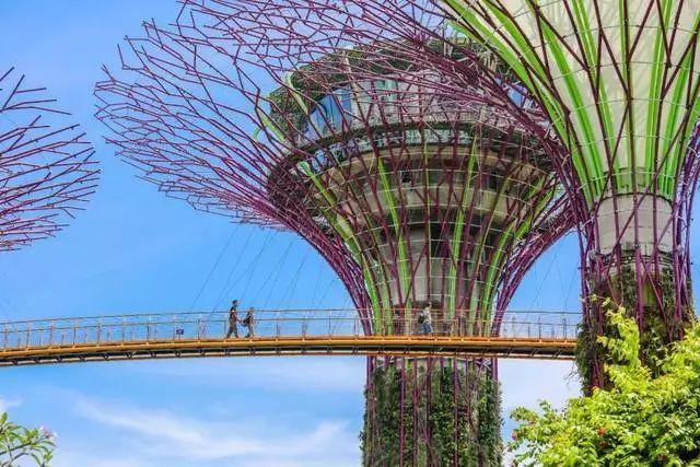 Sạch đẹp thôi chưa đủ, Singapore còn chi hàng nghìn tỷ đồng xây dựng vườn nguyên sinh khổng lồ tuyệt đẹp - hình ảnh 3