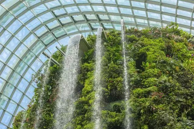 Sạch đẹp thôi chưa đủ, Singapore còn chi hàng nghìn tỷ đồng xây dựng vườn nguyên sinh khổng lồ tuyệt đẹp - hình ảnh 9