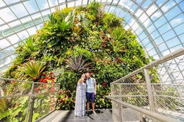 Sạch đẹp thôi chưa đủ, Singapore còn chi hàng nghìn tỷ đồng xây dựng vườn nguyên sinh khổng lồ tuyệt đẹp - hình ảnh 13