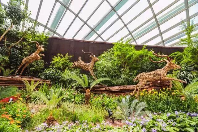Sạch đẹp thôi chưa đủ, Singapore còn chi hàng nghìn tỷ đồng xây dựng vườn nguyên sinh khổng lồ tuyệt đẹp - hình ảnh 6