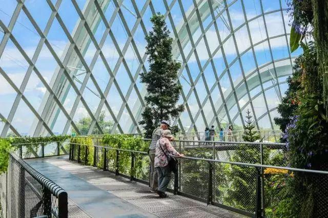 Sạch đẹp thôi chưa đủ, Singapore còn chi hàng nghìn tỷ đồng xây dựng vườn nguyên sinh khổng lồ tuyệt đẹp - hình ảnh 14