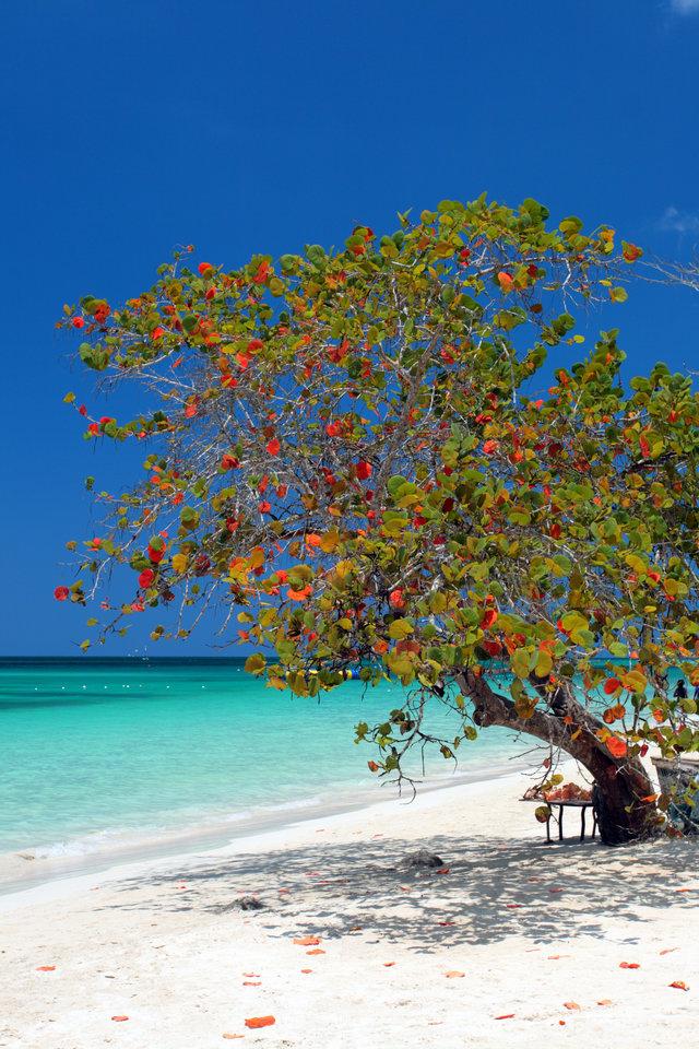Lạc lối trước những bãi biển đẹp như thiên đường ở vùng Caribe - hình ảnh 9