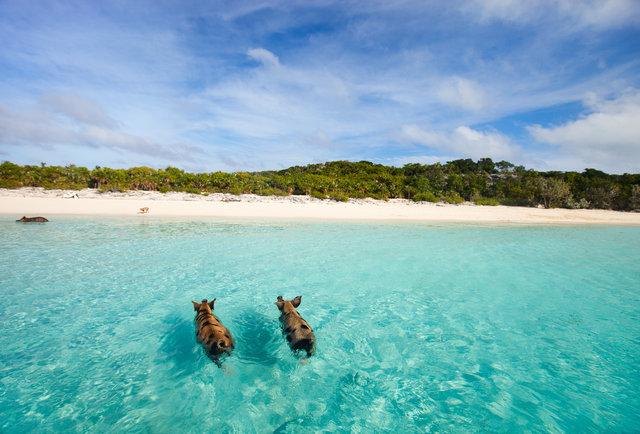 Lạc lối trước những bãi biển đẹp như thiên đường ở vùng Caribe - hình ảnh 12
