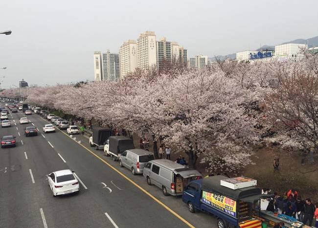 Kinh nghiệm 5 ngày ăn chơi 'thả ga' ở Hàn Quốc, tha hồ sống ảo với loạt ảnh siêu đẹp - hình ảnh 18