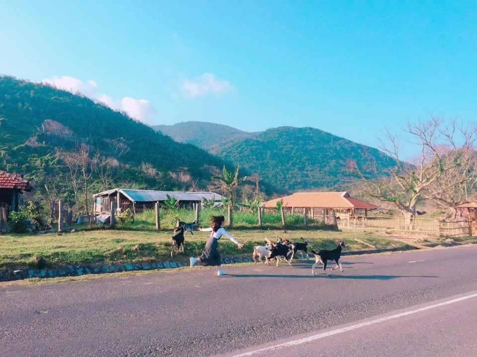 """Giới trẻ đứng ngồi không yên với trang trại """"sống ảo"""" nhất Phú Yên - hình ảnh 2"""