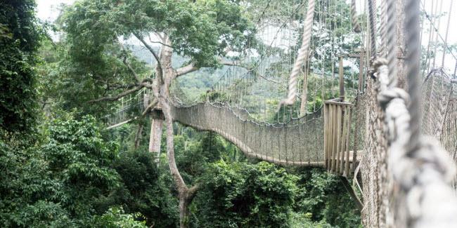 Cầu khỉ Việt Nam nằm trong top 15 cây cầu đáng sợ nhất thế giới - hình ảnh 15
