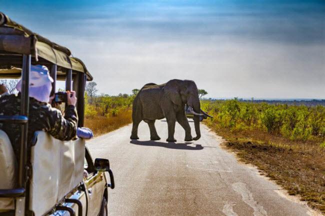 17 trải nghiệm du lịch không thể bỏ qua trước tuổi 50 - hình ảnh 3