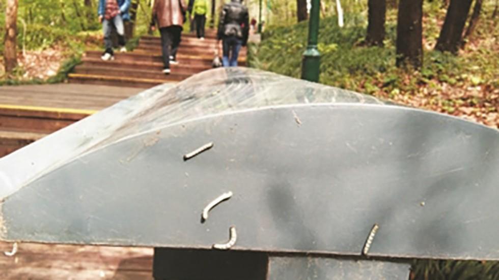 """TQ: Hàng triệu con sâu đo """"uy hiếp"""" thành phố Nam Kinh - hình ảnh 1"""