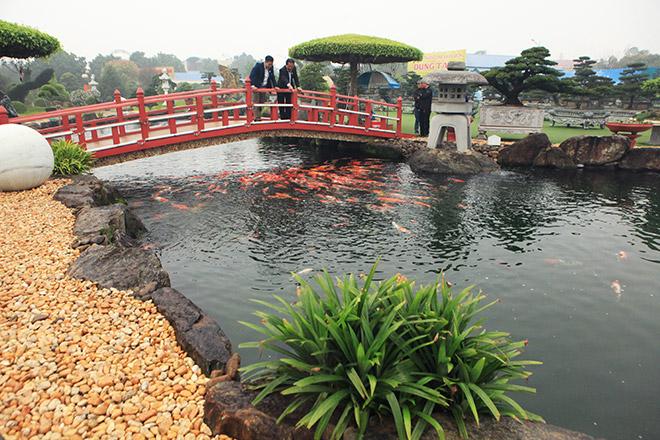 Ngất ngây ngắm hồ cá Koi Nhật Bản gần 10 tỷ tại Việt Nam - 3