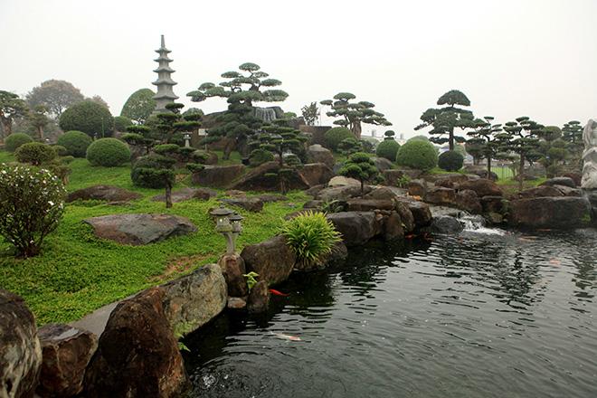 Ngất ngây ngắm hồ cá Koi Nhật Bản gần 10 tỷ tại Việt Nam - 10