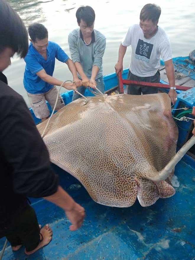 Câu được cá đuối khổng lồ trên biển Phan Thiết - 1